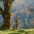 Herbst am Sudelfeld