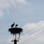 Storche findet man auf jeder 2.Laterne