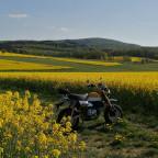 Honda Monkey gelb in gelb