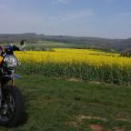 Honda Monkey in gelb